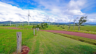 On the Mt Molloy to Mossman road we come across these apparently 'eco' friendly wind turbines which have the ability to power at least two of the quite busy local towns. They made little apparent noise. We would be interested to know if dogs and other animals are affected in the same way.