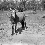 At Boyanda Bill Harris aged around 12 with one of our school ponies Chance. Great natured pony.