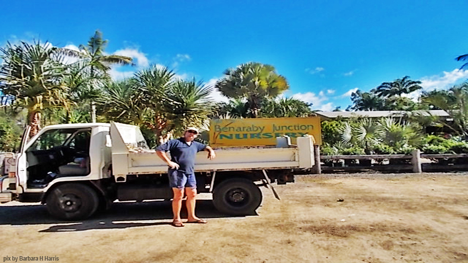 Keith Harris is getting some real palms this time for his front yard behind his great new fence. Got the mighty Diahatsu turbo tipper.